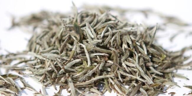 Beyaz Çay Nedir, Faydaları Nelerdir?